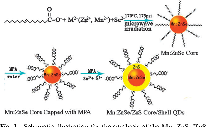 Fig. 1 Schematic illustration for the synthesis of the Mn :ZnSe/ZnS core/shell nanocrystals.