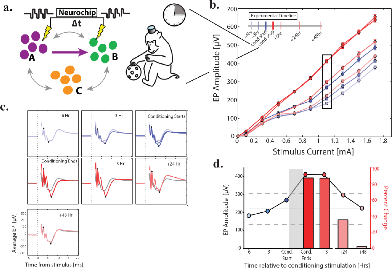 Figure 1.6 Paired-stimulation conditioning session at 20 ms delay. a) Schematic of conditioning between site A and site B using the Neurochip while monkey Q was in the home cage for 3 hours. Sites A, B, and C were same as Figure 1.4a. b) Pre- (blue) and post(red) conditioning stimulus-response curves at time points relative to conditioning as denoted by timeline. c) Average EP from AB at current denoted by black box in b; diamonds denote peak and trough used to measure amplitude in b. Blue EPs in top 3 panels are averaged into a composite baseline (grey trace) in subsequent panels. d) Circles and left axis show EP amplitude at times relative to conditioning. Horizontal grey line is mean of 3 pre-conditioning points; dashed line is 95% confidence interval. Bars and right axis show percent increase in EP amplitude above mean baseline. Conditioning occurred during grey bar, delay between stimuli was 20 ms.