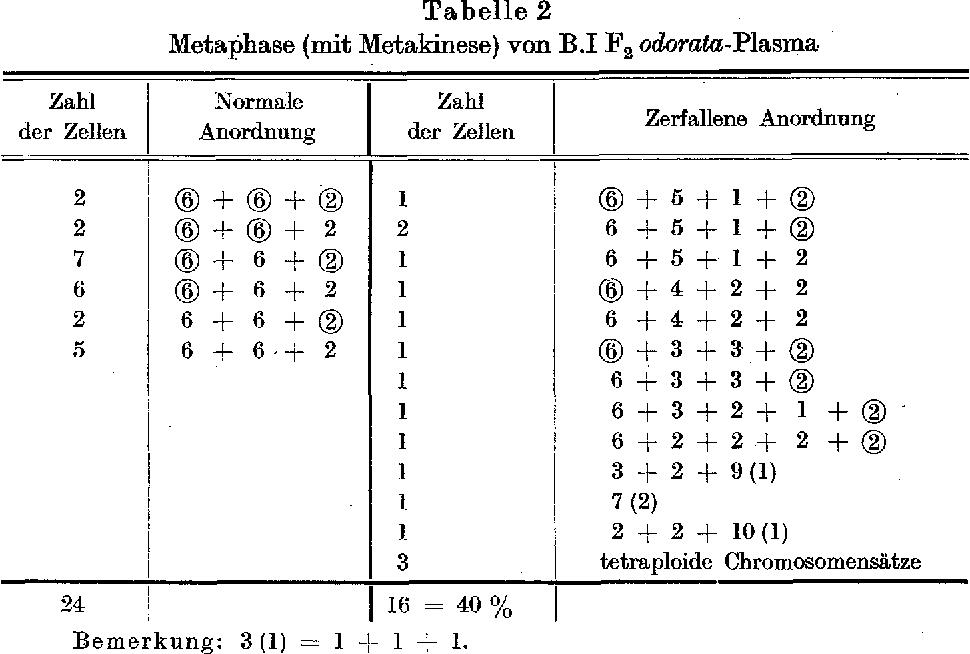 Fig. 201 Der Verla~ff der Reduktionsteilung in den P.M.Z. yon B.I F 1 od.-P1. (1--14) und B.I F~ od.-P1. (15--19)