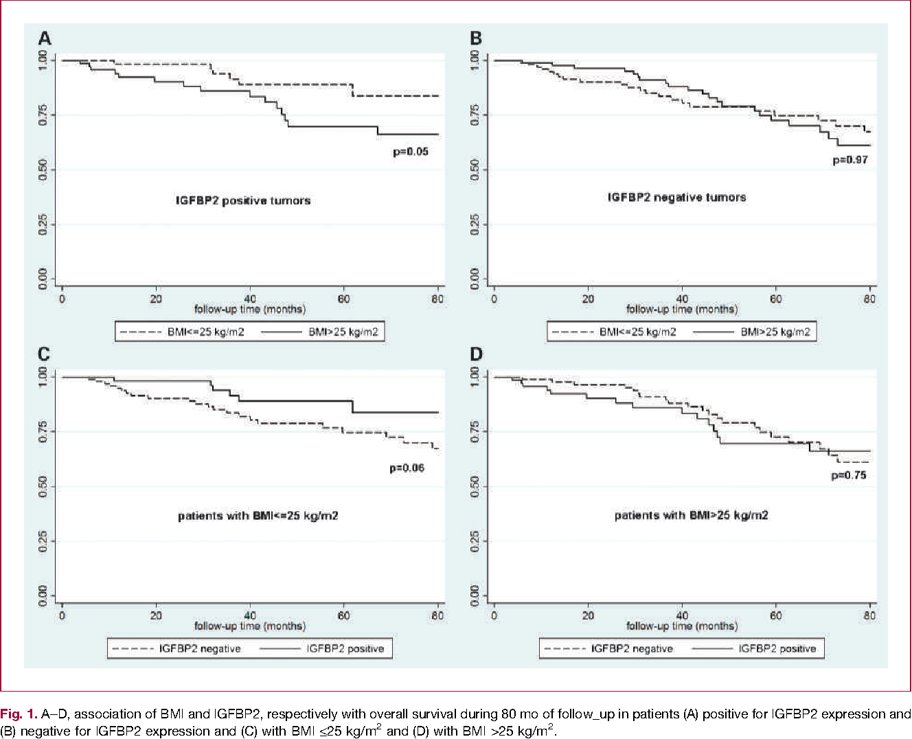 Fig. 1. A–D, association of BMI and IGFBP2, respectively with overall survival during 80 mo of follow_up in patients (A) positive for IGFBP2 expression and (B) negative for IGFBP2 expression and (C) with BMI ≤25 kg/m2 and (D) with BMI >25 kg/m2.
