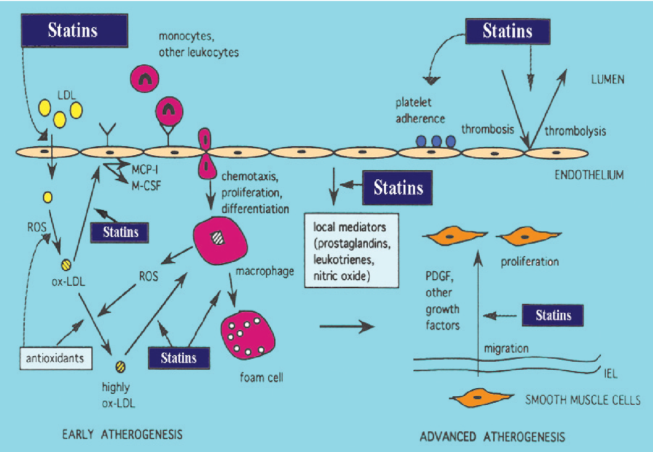 Statins: mechanism of action and effects. - Semantic Scholar