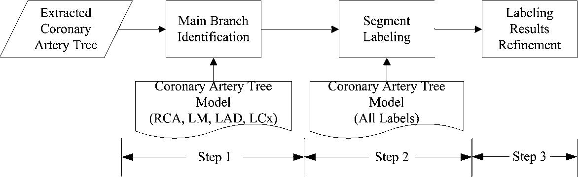 Automatic identification of coronary tree anatomy in coronary ...