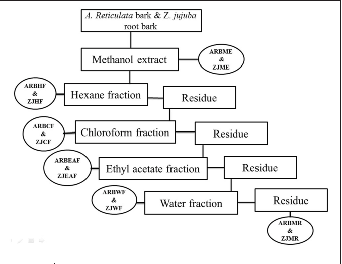 FIGURE 1 | Schematic representation of bioactive guided fractionation of A. reticulata bark and Z. jujuba root bark. ARBME, A. reticulata bark methanol extract; ARBHF, A. reticulata bark hexane fraction; ARBCF, A. reticulata bark chloroform fraction; ARBEAF, A. reticulata bark ethyl acetate fraction; ARBWF, A. reticulata bark water fraction; ARBMR, A. reticulata bark methanol residue; ZJME, Z. jujuba root bark methanol extract; ZJHF, Z. jujuba root bark hexane fraction; ZJCF, Z. jujuba root bark chloroform fraction; ZJEAF, Z. jujuba root bark ethyl acetate fraction; ZJWF, Z. jujuba root bark water fraction; ZJMR, Z. jujuba root bark methanol residue.