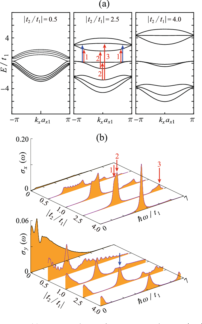 Figure 4. (a) Dispersion relations of 4z-Q1D-PNR with varying |t2/t1|; (b) the x-polarized optical conductivity spectra σx and the y-polarized ones σy as functions of |t2/t1|. The interband transitions contributing to the absorptions peaks are pointed out by the red (for x-polarization) and blue (for y-polarization) arrows.