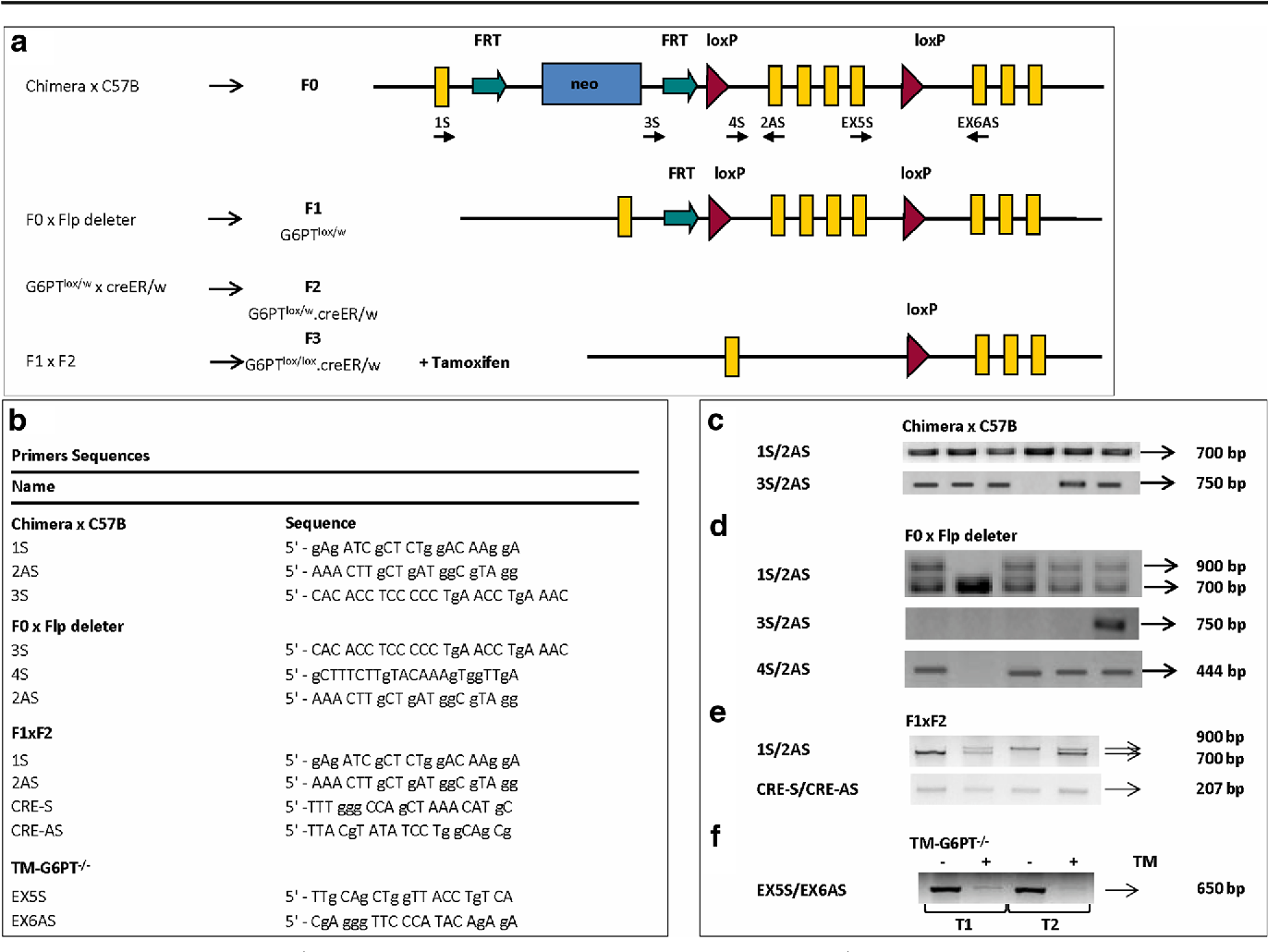Development and characterization of an inducible mouse model for