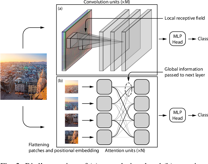 Figure 2 for Are Convolutional Neural Networks or Transformers more like human vision?