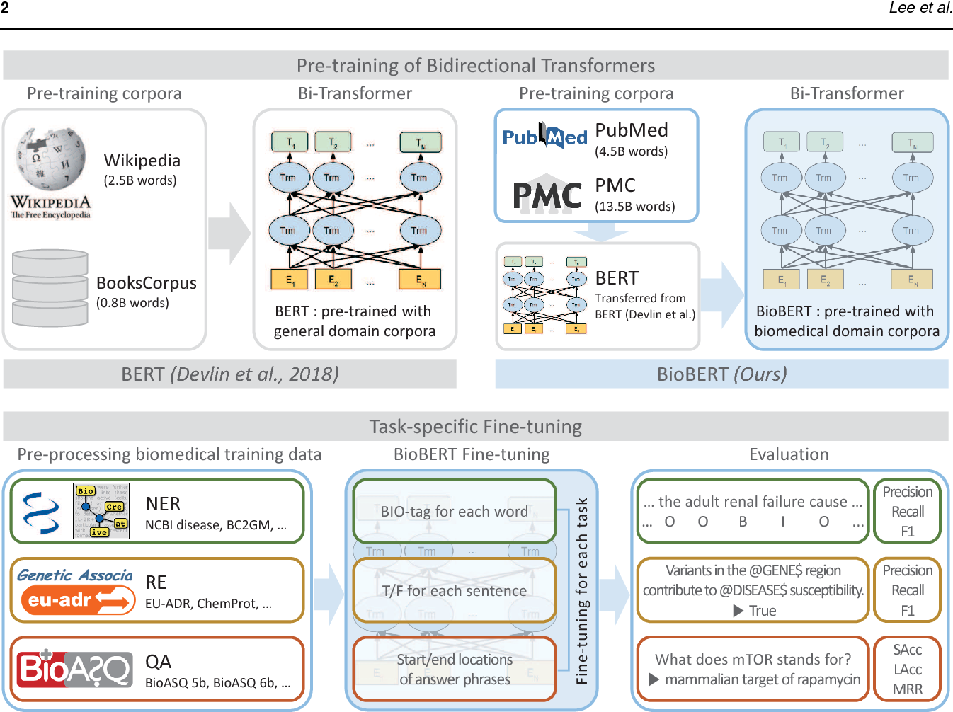Figure 1 for BioBERT: a pre-trained biomedical language representation model for biomedical text mining