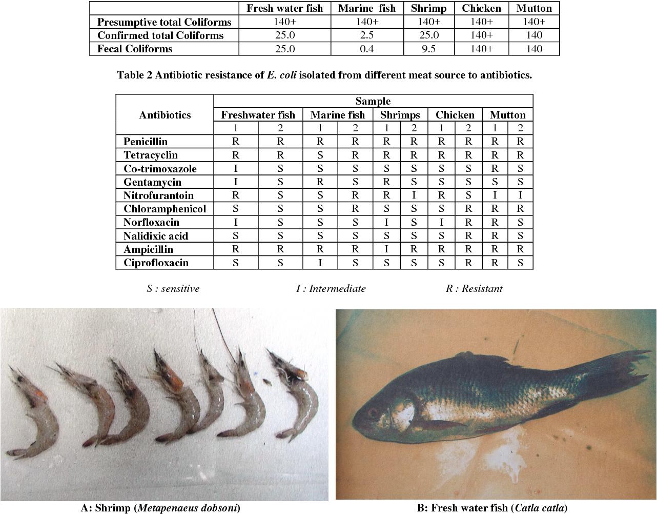 PDF] Escherichia coli - occurrence in the meat of shrimp