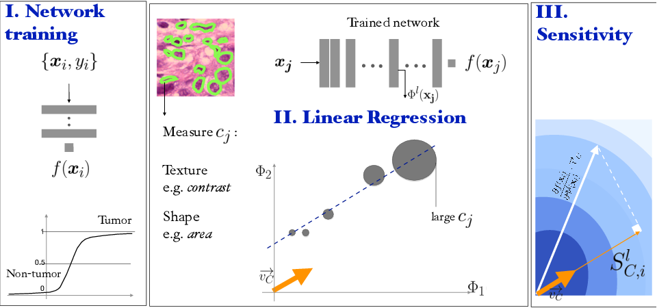 Figure 1 for Regression Concept Vectors for Bidirectional Explanations in Histopathology