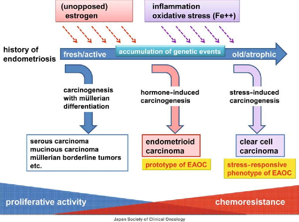 Figure 2 From Ovarian Cancer In Endometriosis Molecular Biology Pathology And Clinical Management Semantic Scholar