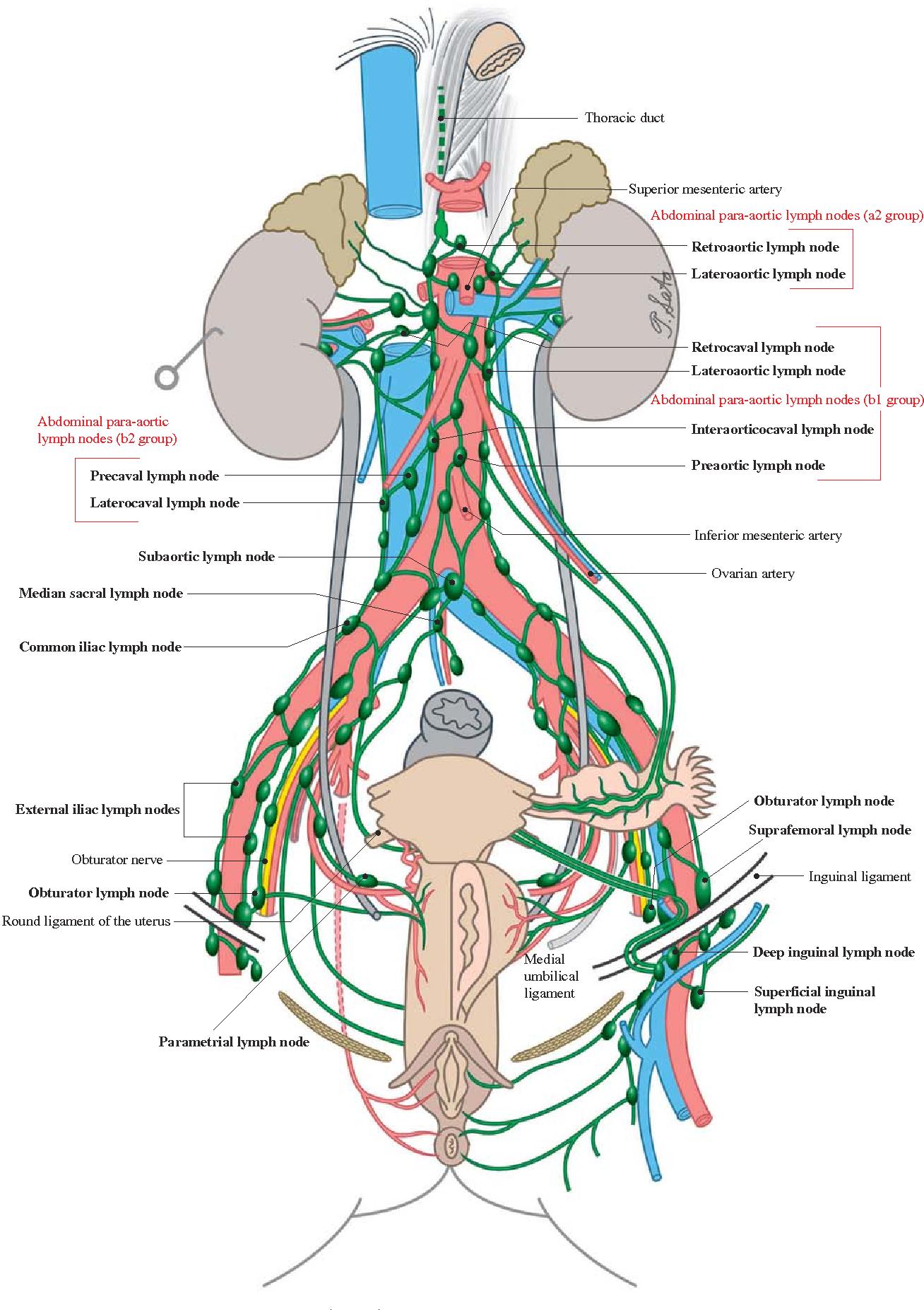 Classification Of Regional Lymph Nodes In Japan Semantic Scholar