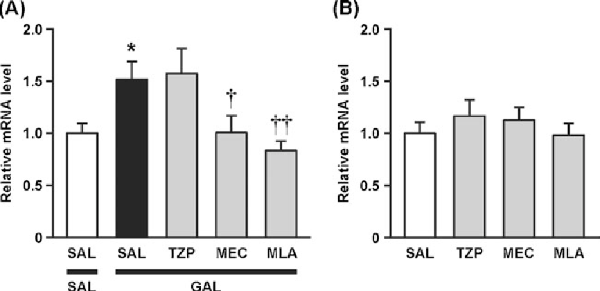 Fig. 4 Effects of mecamylamine, methyllycaconitine, and telenzepine on the galantamine-induced increase in IGF2mRNA levels in the hippocampus of mice. a Galantamine (3 mg/kg; GAL) or saline (SAL) was i.p. injected 3 h before the experiments. Telenzepine (3 mg/kg, s.c.; TZP), mecamylamine (3 mg/kg, i.p.; MEC), methyllycaconitine (6 mg/kg, i.p.; MLA), or SAL (i.p.) was administered 30 min before the GAL or SAL treatment. The values obtained from the SAL/SAL-treated group were arbitrarily set to 1.