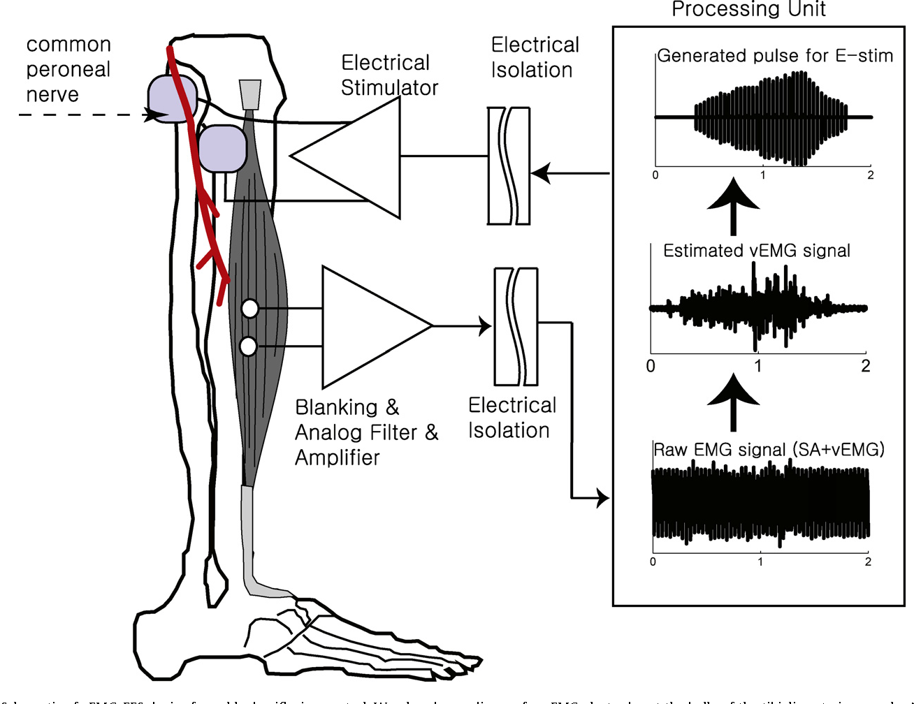 Autogenic Emg Controlled Functional Electrical Stimulation For Ankle Wiring Diagram Browse All Of The Dorsiflexion Control Semantic Scholar