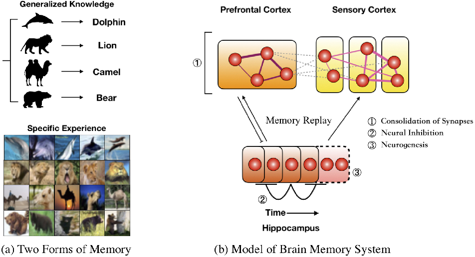 Figure 1 for Triple Memory Networks: a Brain-Inspired Method for Continual Learning