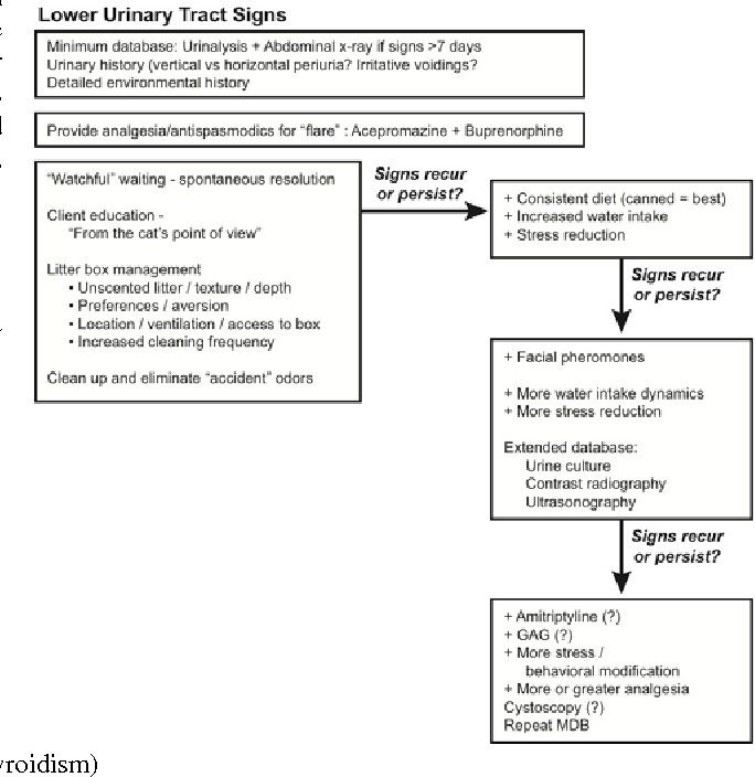 Figure 5. What do WE Do ? Step-wise approach to treatment of cats with idiopathic lower urinary tract signs. More diagnostics should be performed when cats fail to spontaneously clear of their initial lower urinary tract signs and when signs recur to ensure that the diagnosis is really idiopathic lower urinary tract disease. Properly controlled clinical trials may provide better approaches to treatment in the future, but this is what we do in the interim.