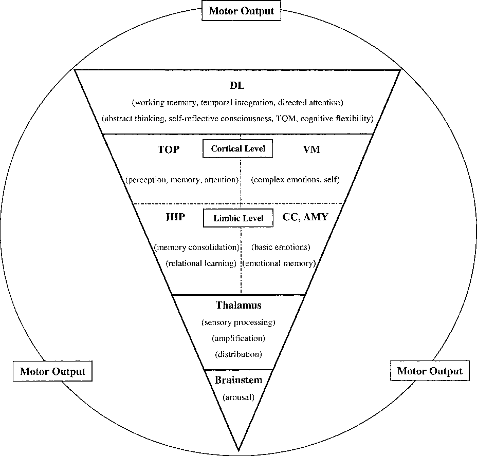 Basic functions of consciousness and its structure