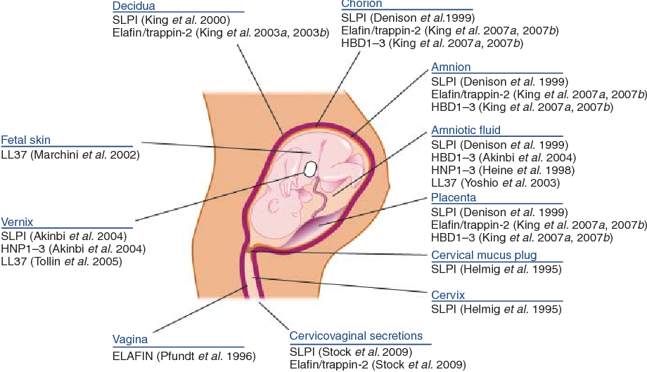 Figure 3 From Antimicrobial Peptides And Pregnancy Semantic Scholar