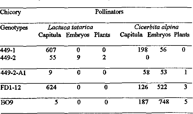 Table 1: Number of capi~ula of chicory pollinated with Lactuca tatarica or Cicerbita alpina and numbers of embryos and of plants obtained.