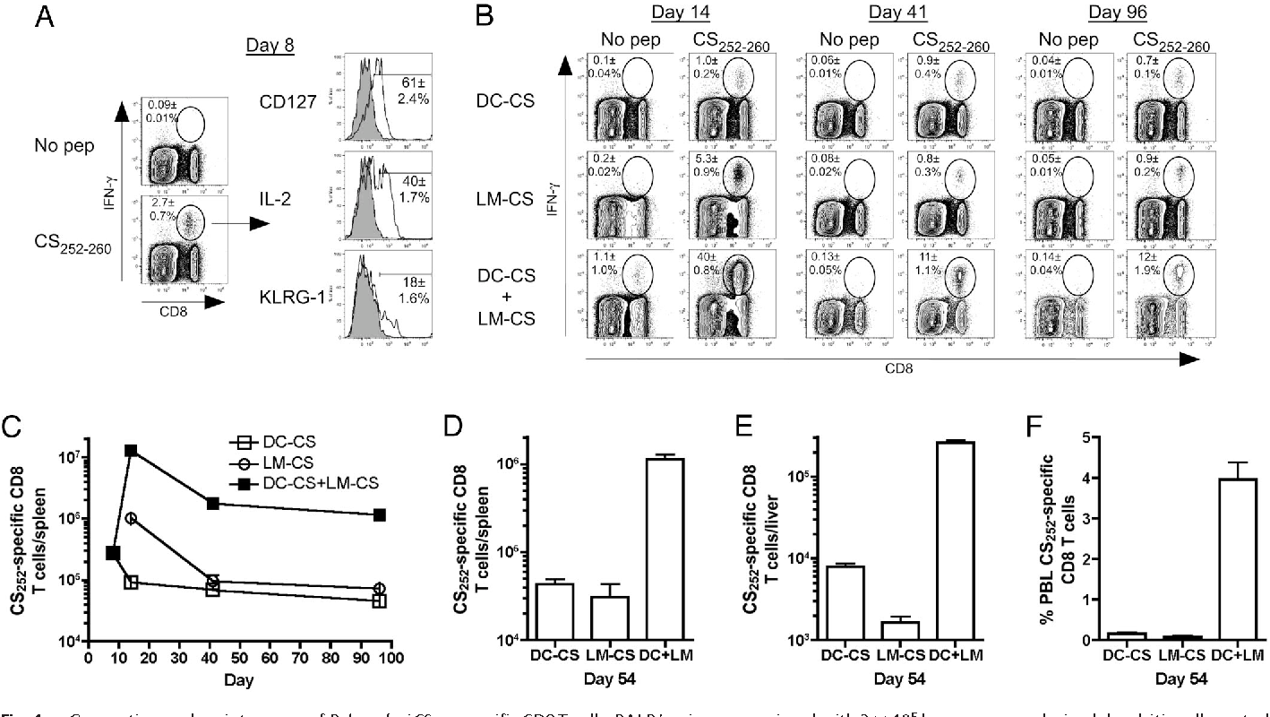 Fig. 1. Generation and maintenance of P. berghei CS252-specific CD8 T cells. BALB/c mice were primed with 3 105 bone marrow-derived dendritic cells coated with CS252–260 (DC-CS). Seven days later DC-CS mice were boosted with 2 107 LM-CS252 (DC-CS LM-CS) or naive mice were primed with 7 106 LM-CS252 (LM-CS). (A) Frequency and phenotype of splenic CD8 T cells that are CS252 specific as determined by ICS 8 days after DC-CS prime. (B) Frequency of splenic CD8 T cells that are CS252 specific on days 14, 41, and 96 as determined by ICS. Profiles from representative mice are shown; numbers represent mean SD; n 3 per group. (C) Total number (mean SD, n 3 per group) of CS252-specific CD8 T cells in the spleen on various days after initiation of immunization. Total number (mean SD, n 3 per group) of CS252-specific CD8 T cells (D) in the spleen and (E) liver or (F) percent CS252-specific CD8 T cells of all PBL 54 days after initiation of immunization for the indicated groups. Data are representative of three experiments.