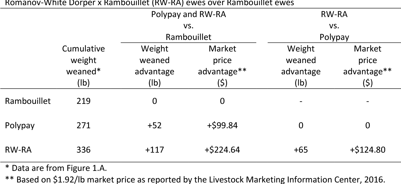 PDF] Productivity of Rambouillet , Polypay , and Romanov