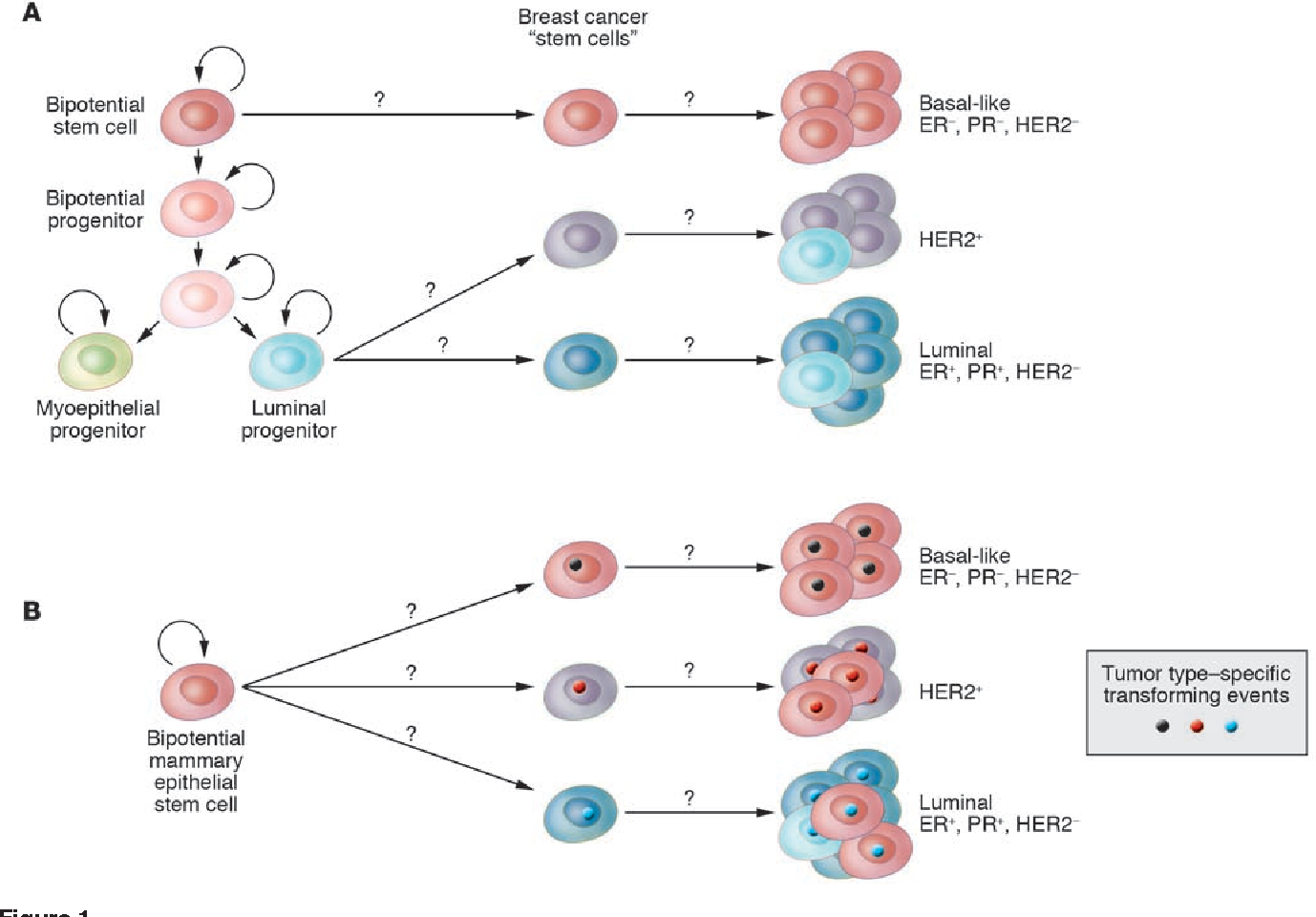 figure 1 from breast cancer origins and evolution semantic scholar