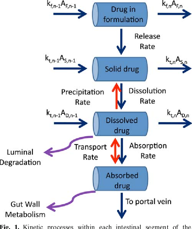 Fig. 1. Kinetic processes within each intestinal segment of the ADAM model (see text for explanation of symbols)