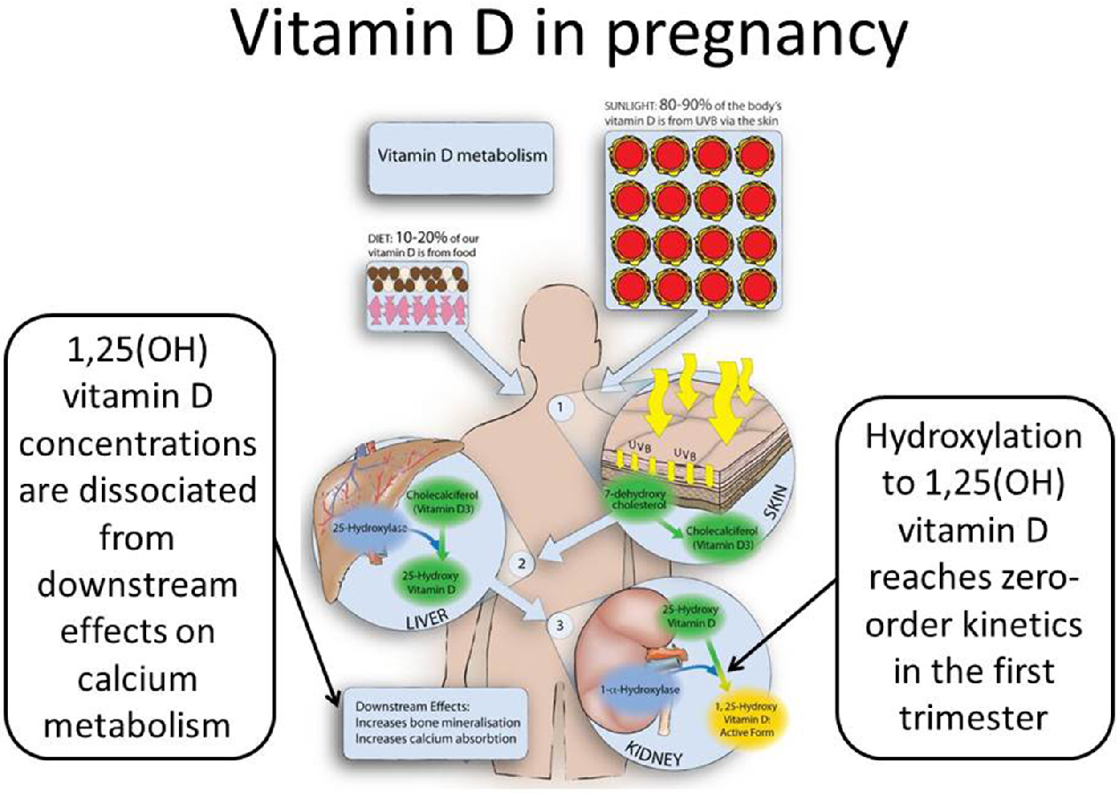 Vitamin D Deficiency During Pregnancy >> Figure 2 From Vitamin D Supplementation Semantic Scholar