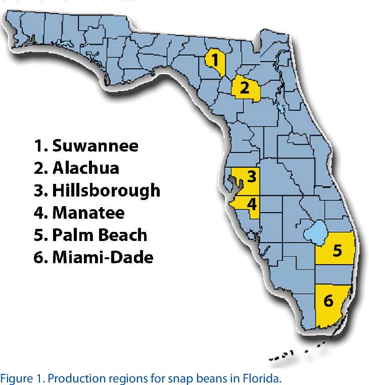 PDF] Florida Crop/Pest Management Profiles: Snap Beans 1
