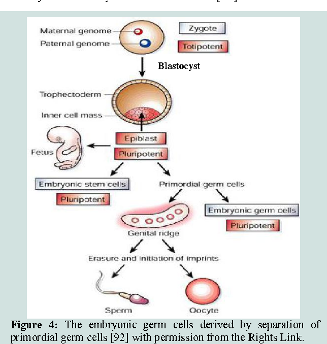 Figure 4 from Stem Cell Therapies in Regenerative Medicine and