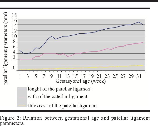 Morphometry of the patellar ligament in human fetuses - Semantic Scholar