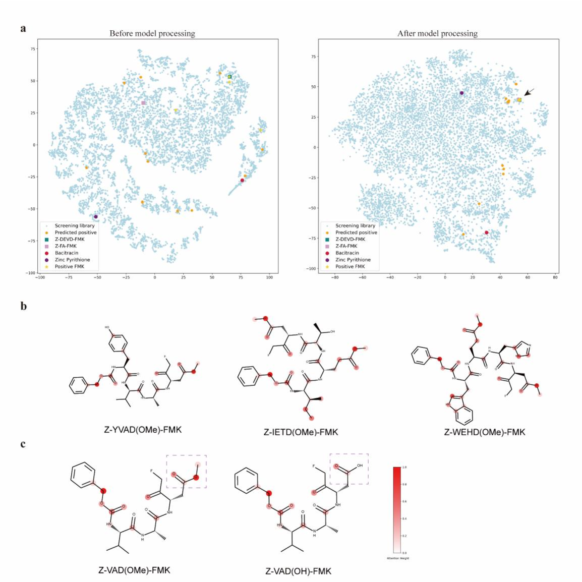 Figure 4 for A Novel Framework Integrating AI Model and Enzymological Experiments Promotes Identification of SARS-CoV-2 3CL Protease Inhibitors and Activity-based Probe