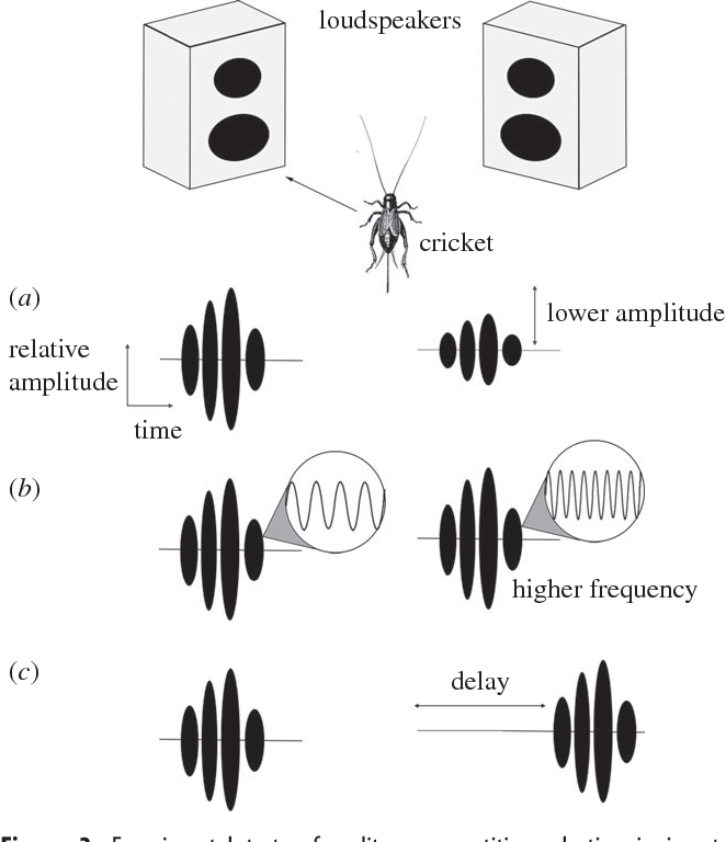 Figure 3 From Attention Like Processes In Insects