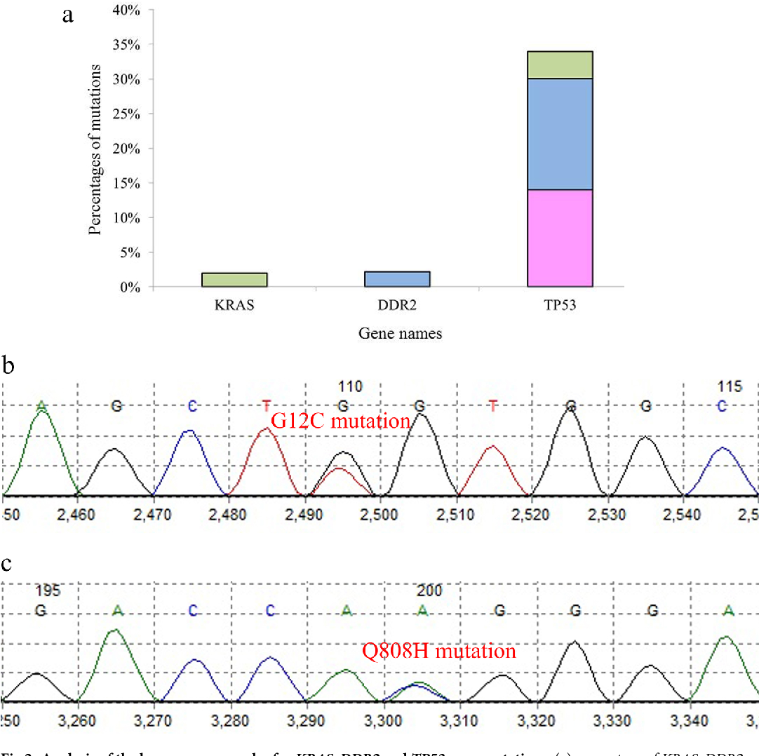 Fig 2. Analysis of the lung cancer samples for KRAS,DDR2 and TP53 gene mutations. (a) percentage of KRAS, DDR2 and TP53 mutations in different subtypes of lung cancer; (green: SCLC, blue: SCC, pink: ADC). (b) G12Cmutation in KRAS and (c) Q808Hmutation in DDR2.