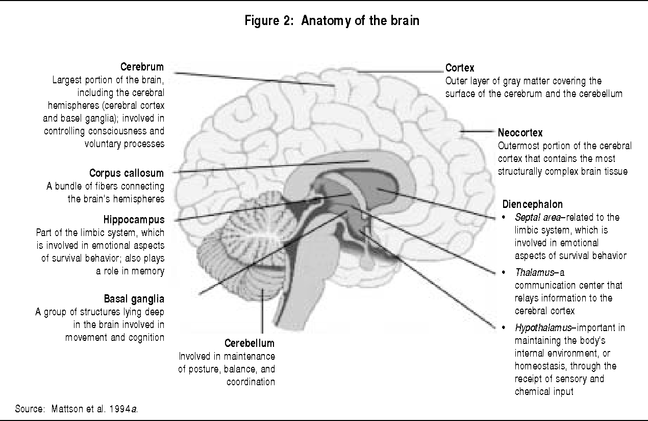 Figure 2 from Prenatal Alcohol Exposure : Effects on Brain Structure ...