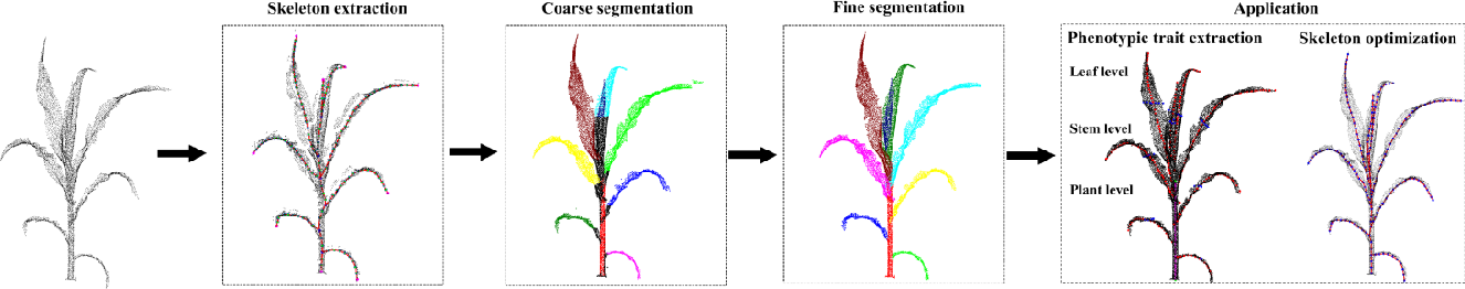 Figure 3 for Stem-leaf segmentation and phenotypic trait extraction of maize shoots from three-dimensional point cloud