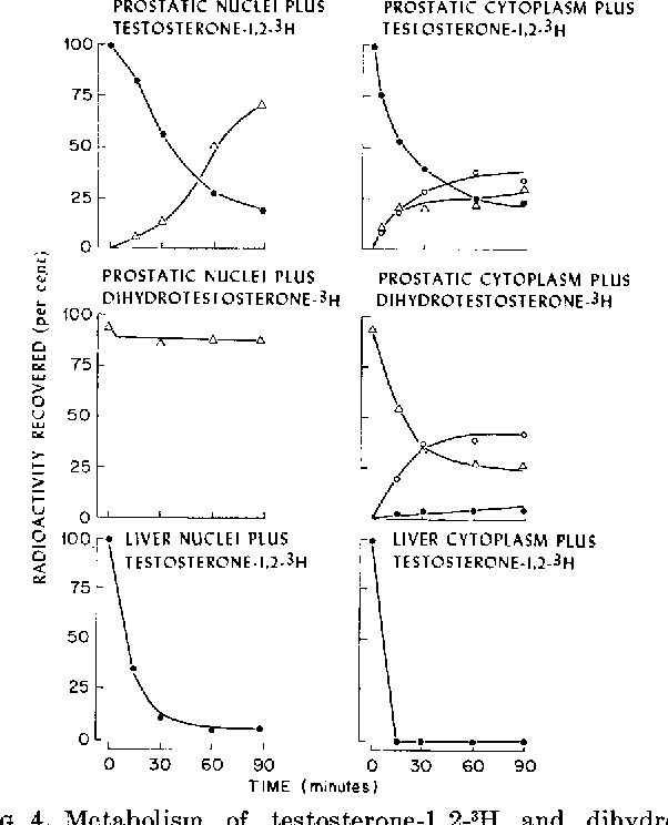 Figure 4 from The Conversion of Testosterone to 5 ~-Androstan-17