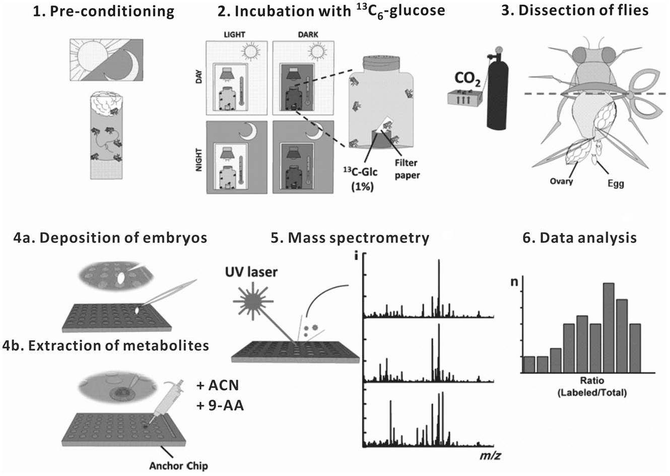 Pdf Isotope Label Aided Mass Spectrometry Reveals The Influence Of