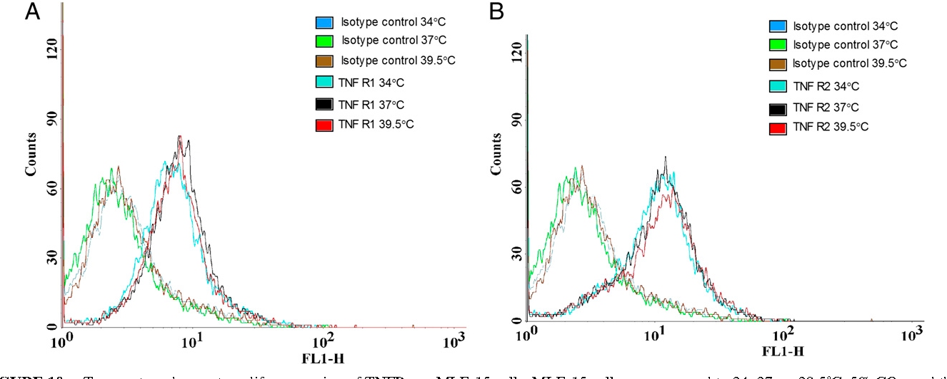 FIGURE 10. Temperature does not modify expression of TNFRs on MLE-15 cells. MLE-15 cells were exposed to 34, 37, or 39.5˚C, 5% CO2, and then evaluated for surface expression of TNFR1 and 2. No difference in surface expression of TNFR1 (A) or 2 (B) exists.
