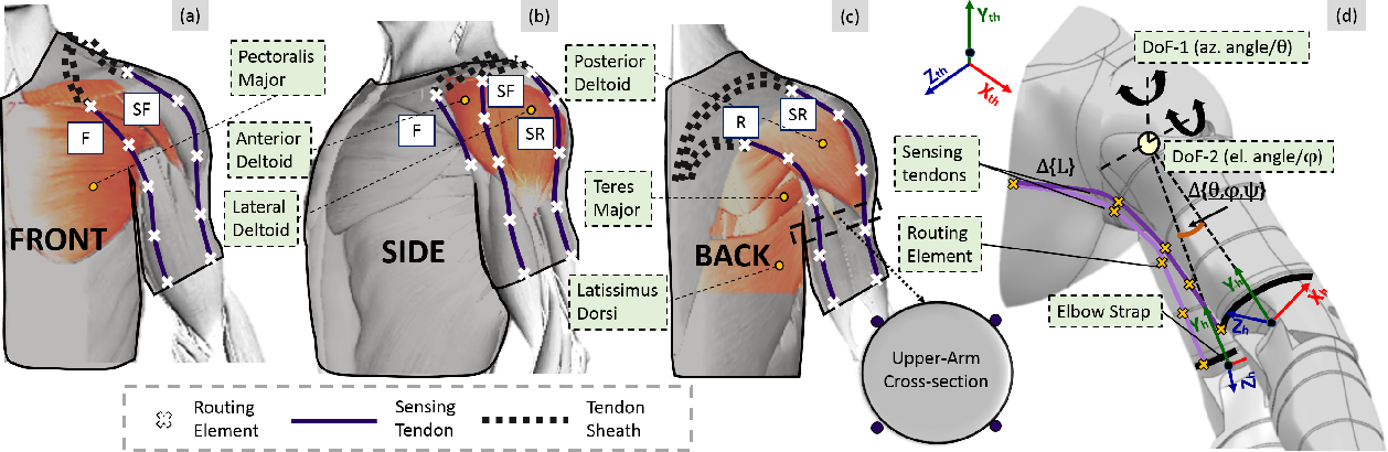 Figure 1 for Design and Prototyping of a Bio-inspired Kinematic Sensing Suit for the Shoulder Joint: Precursor to a Multi-DoF Shoulder Exosuit