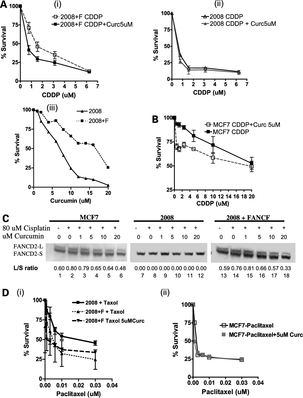 Figure 4. Curcumin chemosensitizes ovarian and breast tumor cell lines. A. i, curcumin sensitizes FAcompetent cells. ii, curcumin does not sensitize FA-affected cells. iii, curcumin dose-response curves for the isogenic pair of FA cells, 2008, and FA-corrected cells, 2008 + FANCF. Dose-inhibition studies evaluating cisplatin response in the 2008 and 2008 + FANCF cell lines with the addition of 5 Amol/L curcumin. 2008 + FANCF (5), 2008 + FANCF with curcumin (n), 2008 (E), and 2008 + curcumin (4). Representative of three independent experiments. Points, percentage survival; bars, SE. B, curcumin sensitizes breast cancer cells. Dose-inhibition studies of MCF7, with 5 Amol/L curcumin. n, MCF7; 5, MCF7 with curcumin. Representative of three independent experiments. Points, percentage survival; bars, SE. C, Western blot confirming the inhibition of FANCD2 monoubiquitination by curcumin in MCF7 and 2008 + FANCF cell lines. The 2008 cells do not monoubiquitinate FANCD2. Lanes 1, 7 , and 13, untreated cells; lanes 2, 8, and 14, cells treated with 80 Amol/L cisplatin for 24 h; lanes 3 to 6, 9 to 12, 15 to 18, cells treated with 80 Amol/L cisplatin and increasing doses of curcumin (1, 5, 10, and 20 Amol/L) for 24 h.D, curcumin does not synergize with paclitaxel. Dose-inhibition studies evaluating paclitaxel response alone in the (i) 2008 and 2008 + FANCF cell lines and 2008 + FANCF with paclitaxel and 5 Amol/L curcumin, (ii) MCF7 cell lines with paclitaxel alone and the addition of 5 Amol/L curcumin. Representative of three independent experiments. Points, percentage survival; bars, SE.