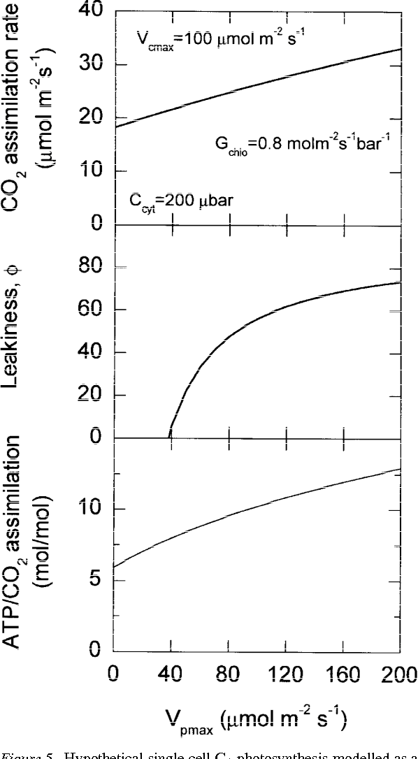 hypothetical single cell c4 photosynthesis modelled as a function of  different pep carboxylation