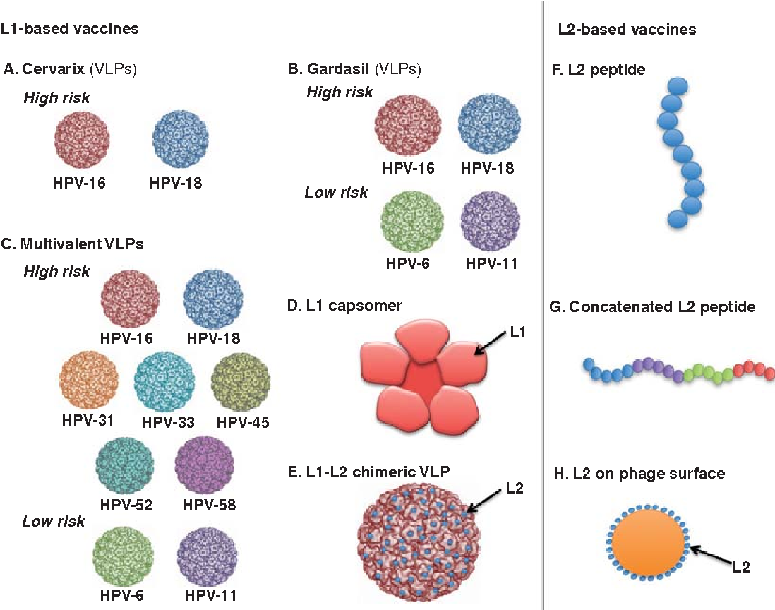 Figure 3 from Emerging human papillomavirus vaccines. - Semantic Scholar
