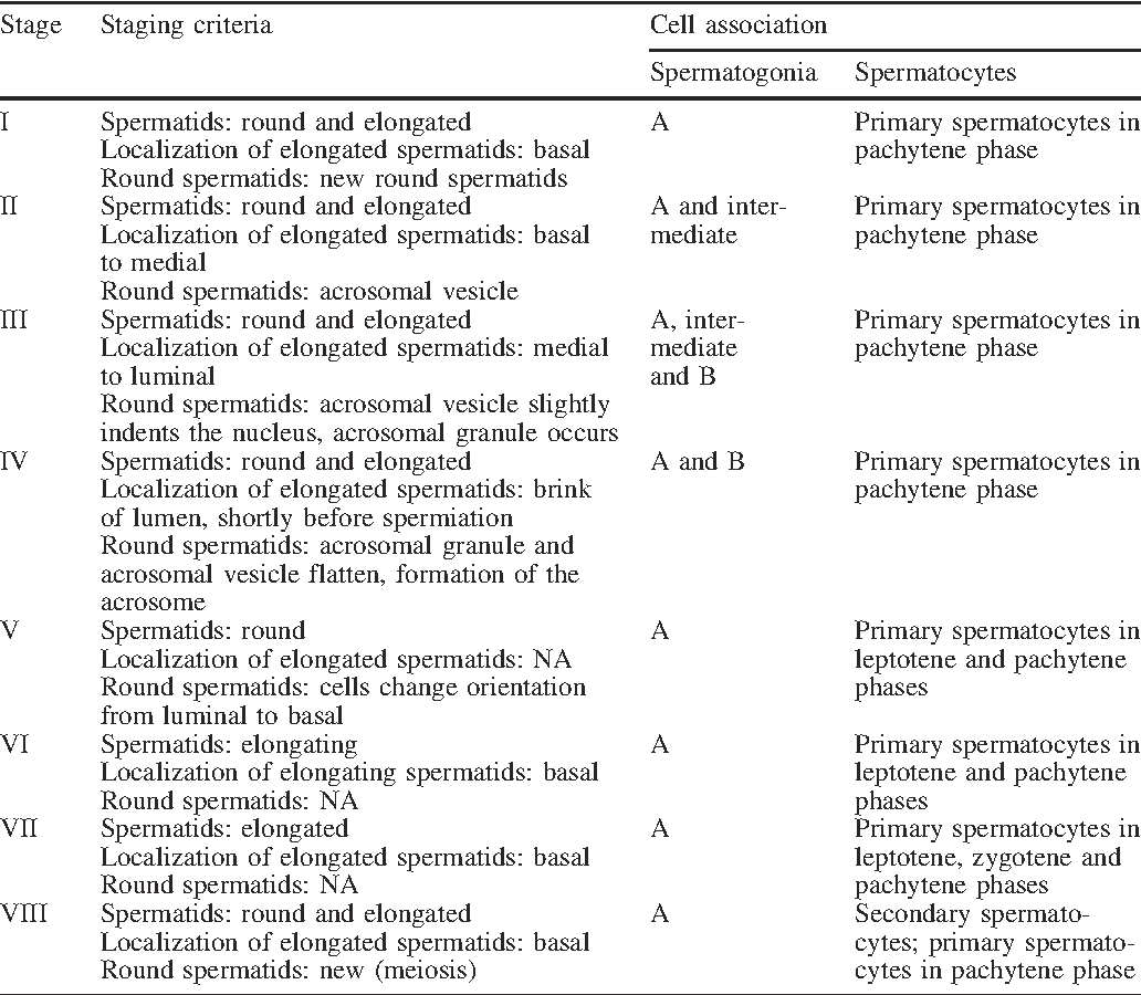Table 2 Staging criteria and cell associations for the stages of the seminiferous epithelium cycle in roe deer (NA not applicable)