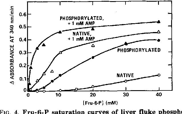 FIG. 4. Fru-6-P saturation curves of liver fluke phospho- phosphorylated enzyme was 1.4 mM, and apparent V,,, was