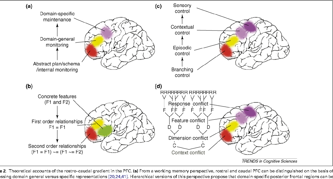 Figure 2 from Cognitive control, hierarchy, and the rostro ...