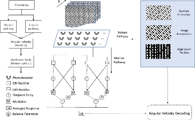 Figure 1 for Profiling Visual Dynamic Complexity Using a Bio-Robotic Approach