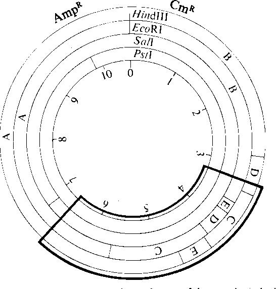 lactose operon diagram of