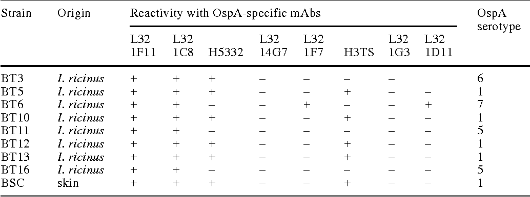 Table 1 Reactivity of Bulgarian Borrelia burgdorferi isolates with OspA-specific mAbs in immunoblot. (OspA outer surface protein A, mAb monoclonal antibody, I. Ixodes)