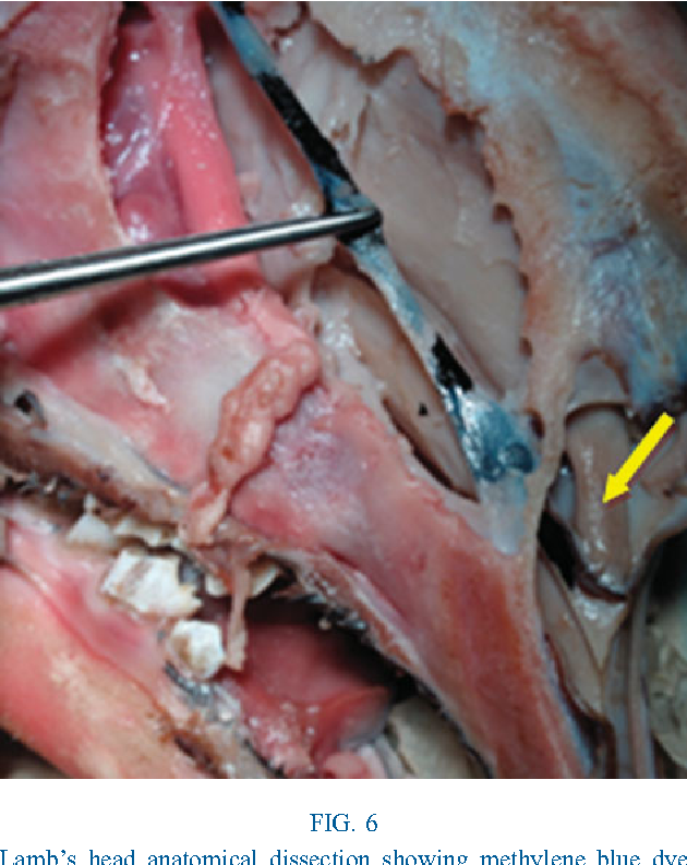 Figure 3 from An animal model for endoscopic endonasal surgery and