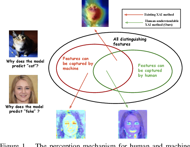 Figure 1 for Towards Human-Understandable Visual Explanations:Imperceptible High-frequency Cues Can Better Be Removed